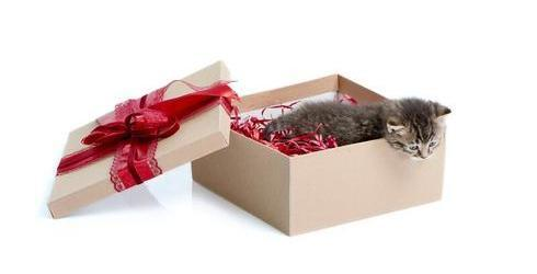 Super süße Katzen Geschenke